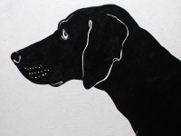 Black Dog on White (Black Labrador Retriever), 36x36