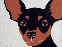 Taco (Chihuahua), 8x8