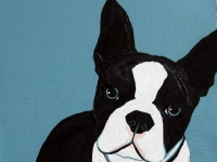 Sherman (Boston Terrier), 8x8