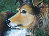 "My Zoe 2 (Shetland Sheepdog), 8""x8"""