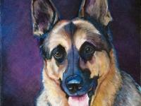 Tucker (German Shepherd), 8x8