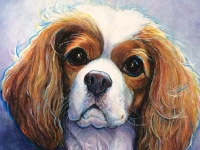 Hollywood 2 (King Charles Cavalier), 8x8
