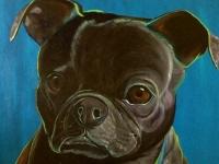 Archie (Pug/Boston Terrier), 36x36
