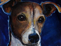 Buddy (Jack Russell Terrier), 5x5