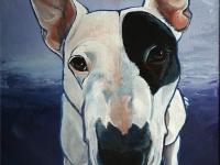 Coconut (Bull Terrier), 20x16