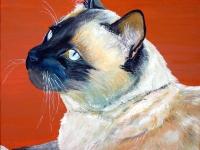 Frankie Blue Eyes (Siamese Cat), 12x12