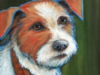 Jack (Jack Russell Terrier), 5x5