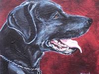 Malone (Black Labrador Retriever), 8x8