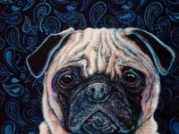 Paisley (Pug), 8x8