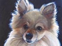 Rocco (Pomeranian), 20x16