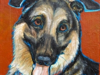 Tosh (German Shepherd), 5x5