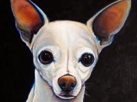 Zeus (Chihuahua), 18x18
